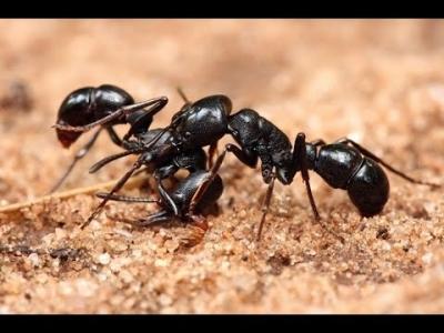 اعجازعلمی قرآن در جانور شناسی (4) : سبک زندگی و روابط مورچه ها