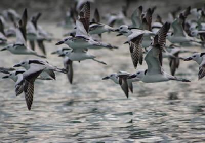اعجاز علمی قرآن در جانور شناسی (1) : زیست اجتماعی حیوانات و پرندگان