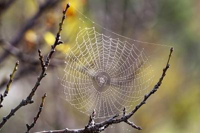 اعجازعلمی قرآن در جانور شناسی (3) : تار عنکبوت؛ خانه ای سست